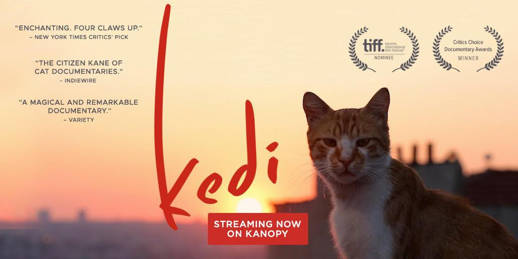 Kedi - Winner of Best First Documentary and nominated for Best Documentary at the Critics' Choice Documentary Awards. Fourth Place for Best Documentary (2017) in the Indiewire Critics' Poll.
